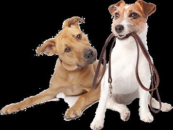 hotel pre psov, vycvik psov
